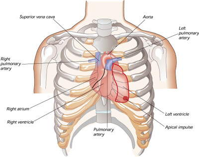 INFO:Warm Water and the prevention of heart attacks