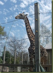 Zoo March 11 016