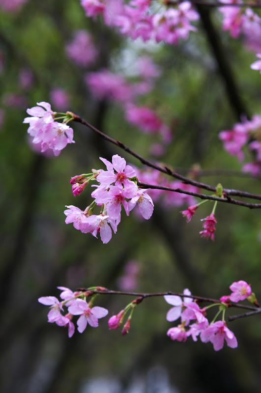 陽明山花卉實驗中心