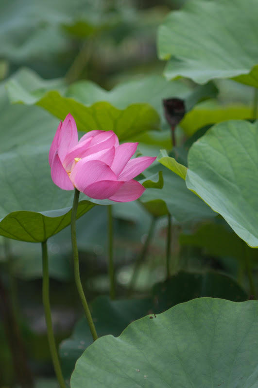 20060616揪團-植物園