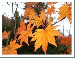 Ashiyasu Fall 2008-11-15 017
