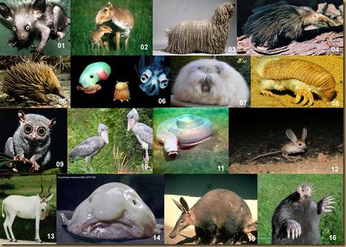 painel animais exóticos