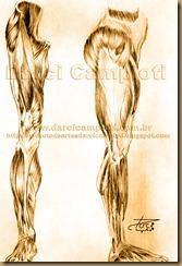 musculos pernas 002