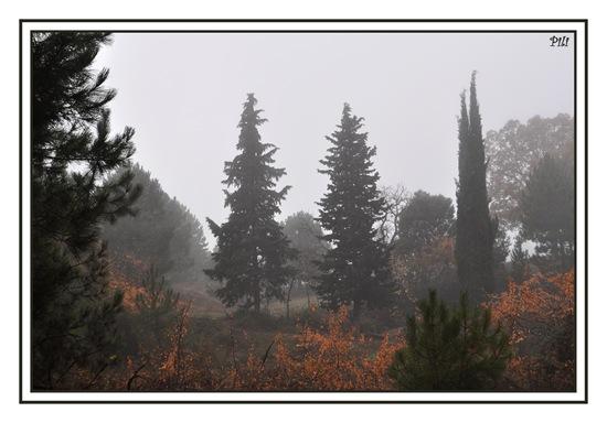 Día de niebla
