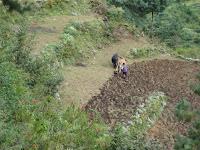 IMG_1067.JPG (Phāphlu, , Nepal) Photo