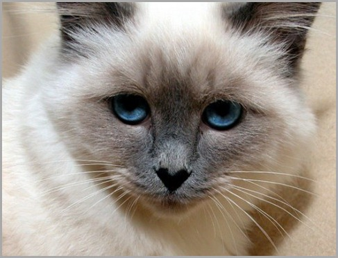 ojos-de-gato