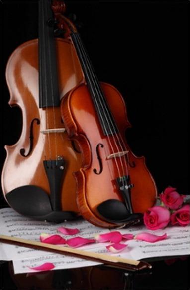rosas-flores-forrado-tenga-en-cuenta_3334748