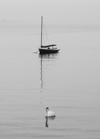 Swan and Sailboat in the Mist - 1