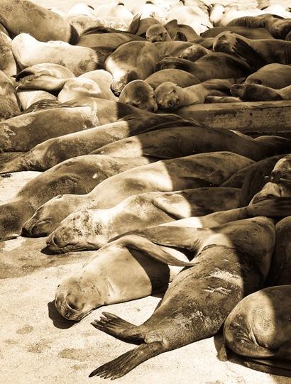 Seals (1 of 5)