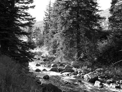 Wooded Stream in Breckonridge
