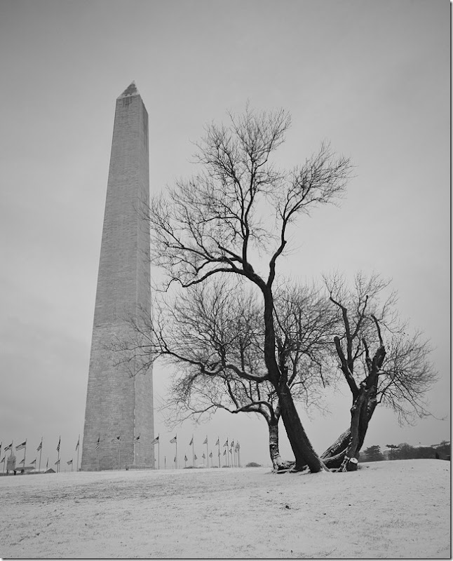 Washington Monument and Barren Tree