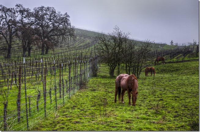 Vineyard Horses
