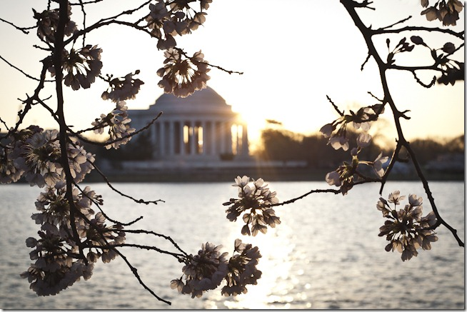 Cherry Blossoms with Sunrise through the Jefferson Memorial-3
