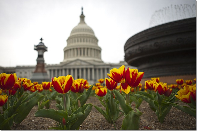 Spring Flowers at the U.S. Capitol Building-1