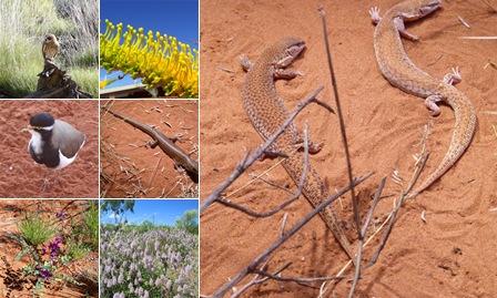 View Alice Springs Desert Park, NT