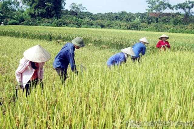 rice mill vietnam Learn about working at vietnam rice mill - dong thap branch of food processing and exporting - join linkedin today for free see who you know at vietnam rice mill - dong thap branch of food processing and exporting -.