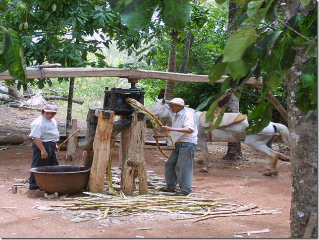 Typical-sugar-cane-press