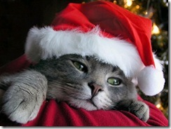 christmas-cat-wallpaper