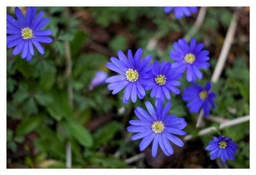 flower3web