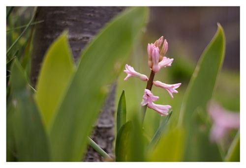 flower1web