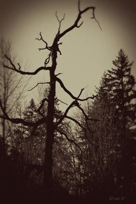 HauntedTree-Vintage.jpg