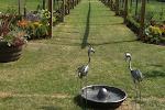 Children's farm at Assington barn Colchester and Sudbury