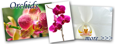 lightbox_Orchids
