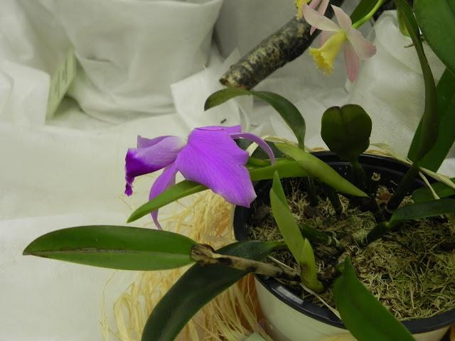 орхидея знакомства