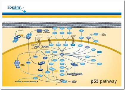 paquete de libros en neurociencias en formato .pdf