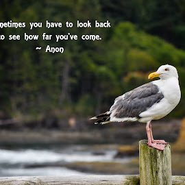 Sometimes You Have to Look Back to See How Far You've Come by Jennifer McWhirt - Typography Quotes & Sentences ( animals, quotes, photographybyjenmcwhirt.com, seabird, typography, birds, sea gull )