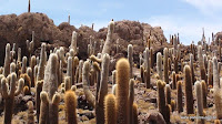 Ilhas de Cactus - Uyuni Bolivia Photo