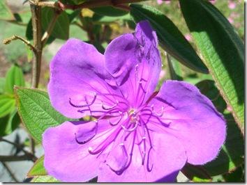 princess flower 002