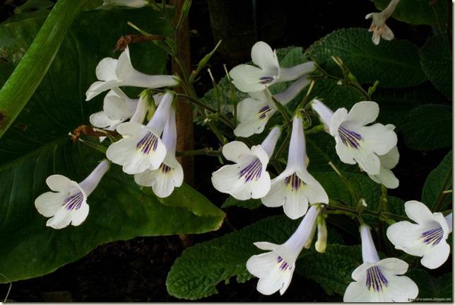 flowers-1-4