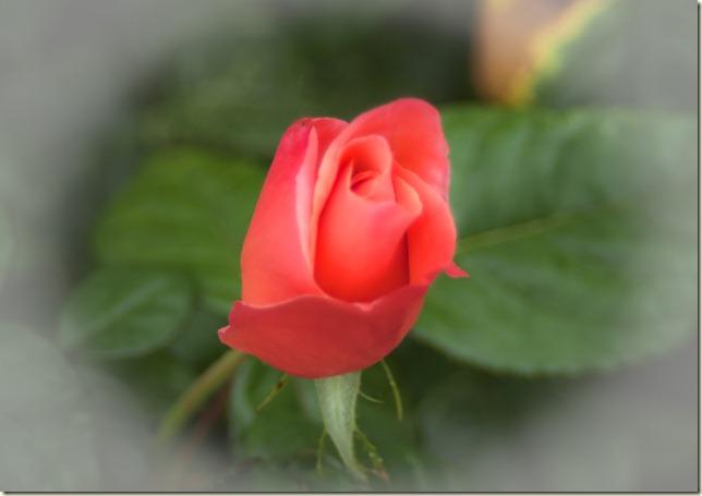 flowers-1-3