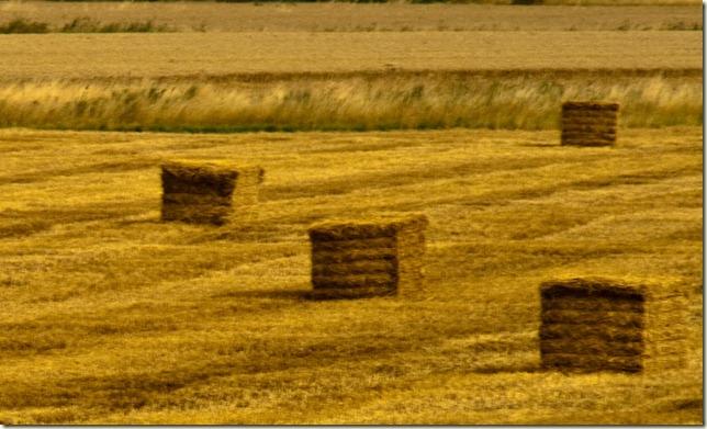 Harvest-1-4