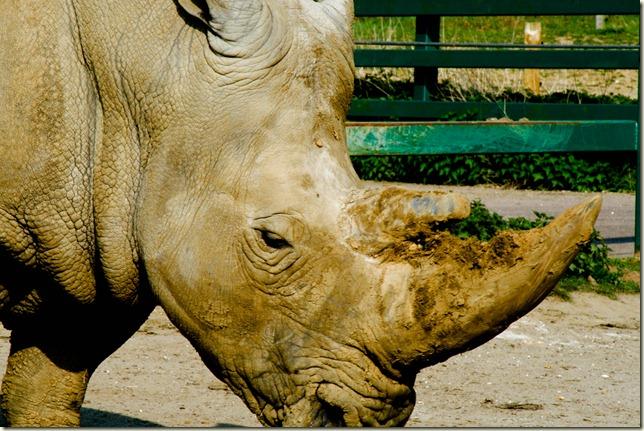 Rhino-1-2
