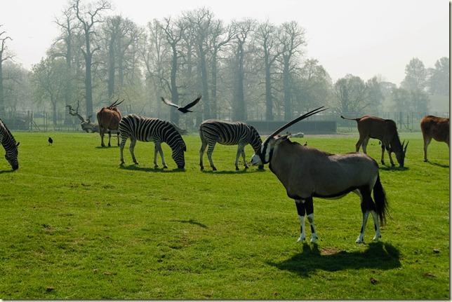 Zebra etc-1