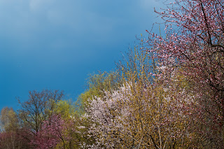 Spring colorful flowering trees with threatening storm clouds above