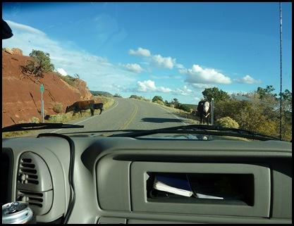 Utah Cows