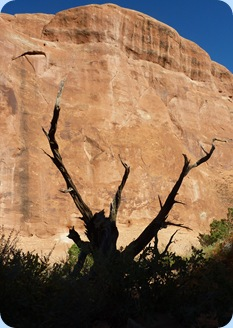 Arches NP Dead Tree 1
