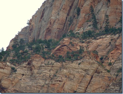 Zion Nat'l Park Bridge Mountain Arch