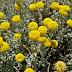 Small, yellow flora