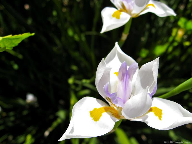 White flowers in the White Flower Garden