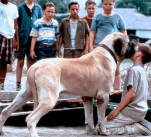The Sandlot Dog Have the sandlot syndrome