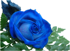 ROSAS_LADY_MEL (3)