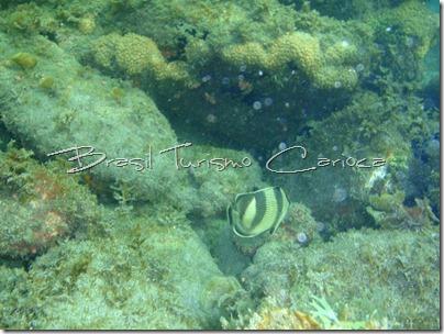 angra dos reis rio de janeiro peixes