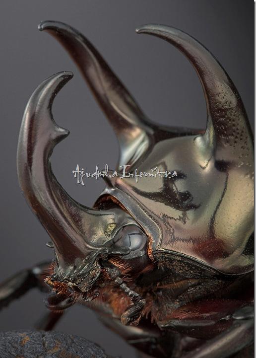 insetos incriveis ajudinha informatica 9