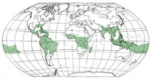 Karte Bambus vorkommen, Bambus Karte
