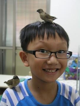 E:\shane991102\shane991101餵食斑文鳥\P1010251.JPG