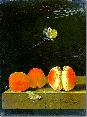 Adriaen Coorte, Still Life Early 18th century